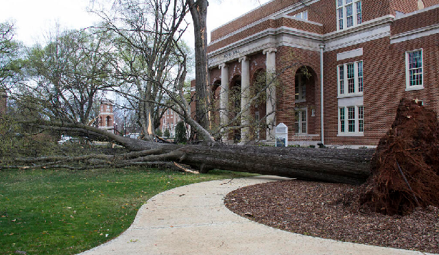 Tree Damage on Alabama Campus