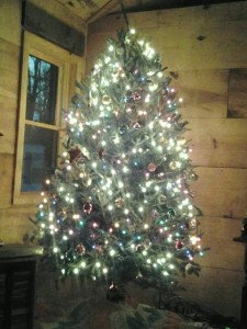 Christmas Tree in Cabin